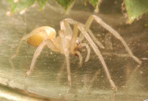 Mazda recalls cars over spider infestation