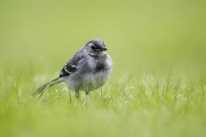 Dorset mechanic discovers bird nest under car bonnet