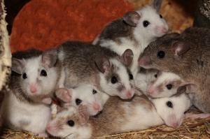 Kent car garage finds mice nest under customer's bonnet